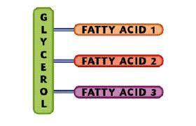 causes of high triglycerides