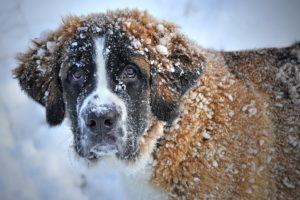 cold exposure benefits